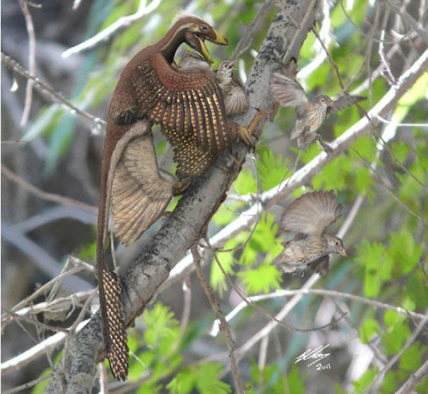 Feather evolution